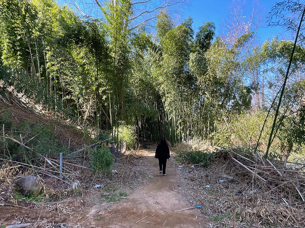 Swannanoa East Greenway